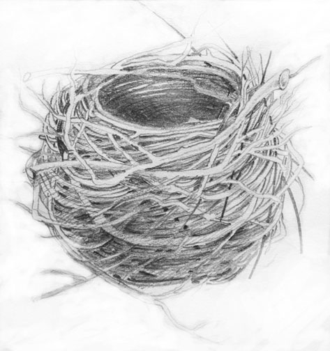 Nest # 12, graphite on paper, 62 x 54 inches