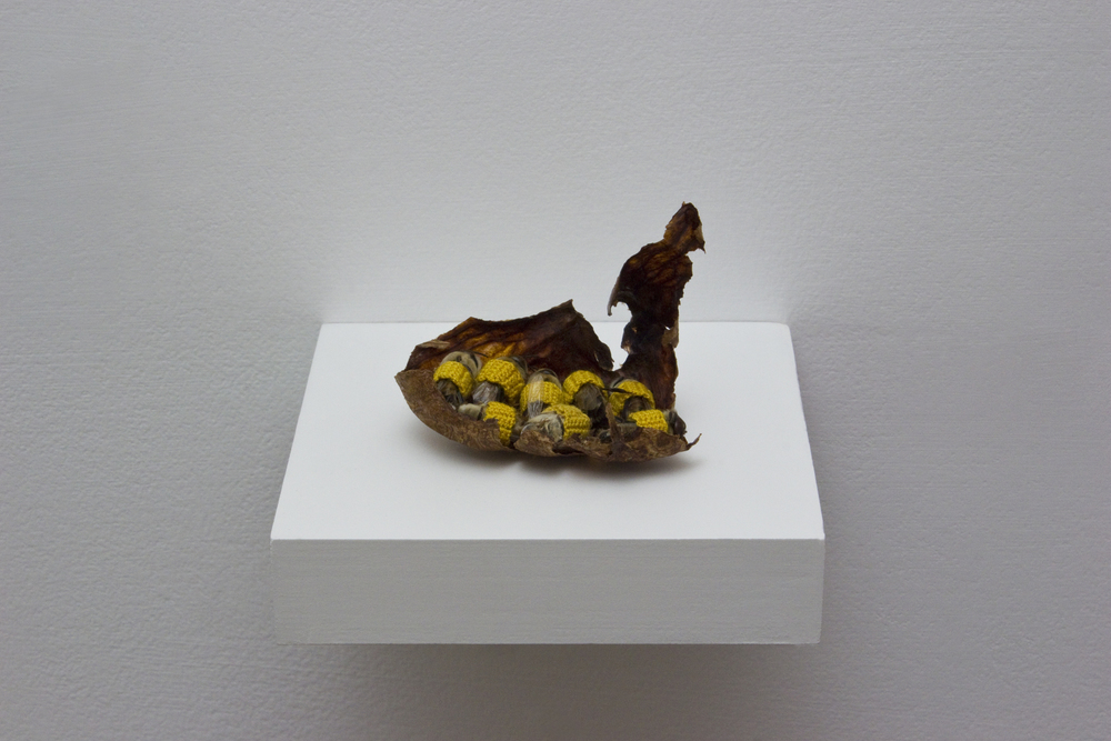 "Esther Traugot, ""My Drones,"" 2016 male honeybees, dyed cotton thread, avocado pitt wrapper, wood shelf 3 ½ x 3 ½ x 2 ⅜ inches"