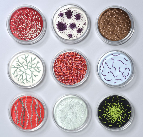 Ruth Tabancay, Microbiology Lab Series, (overview)