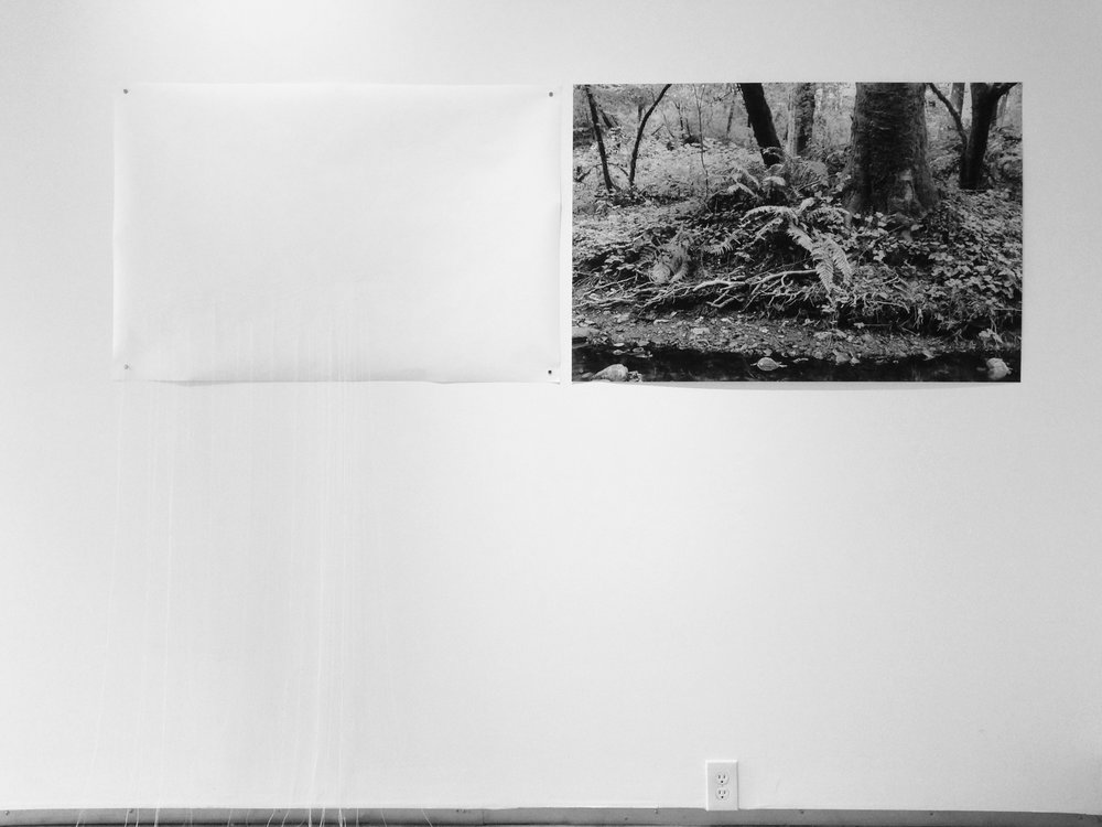 """Portrait of Roots and Fern"" (diptych), 2017, archival inkjet photograph on kozo paper, thread on kozo paper, edition of 3 plus AP 30 x 45 inches each panel, overall dimensions variable"