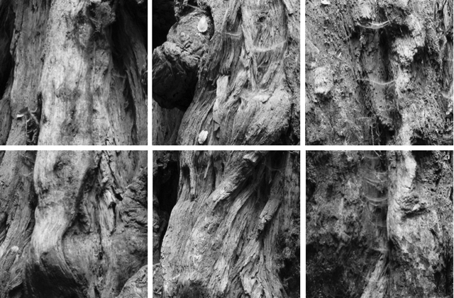"""Coastal Redwood Portrait #3,"" 2017, archival inkjet photograph on kozo paper, edition of 10, sections 1-6, 15 x 15 inches each"