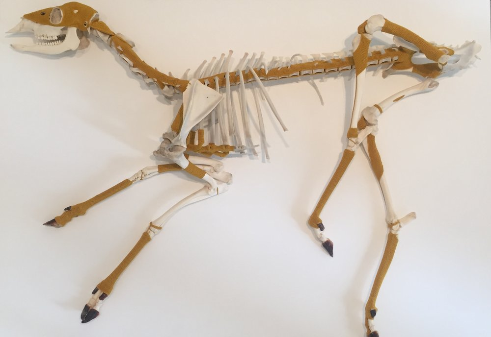 """Esther Traugot, """"Deer One,"""" 2018, found deer skeleton, dyed cotton/bamboo yarn, 8.5 x 46 x 38 inches"""