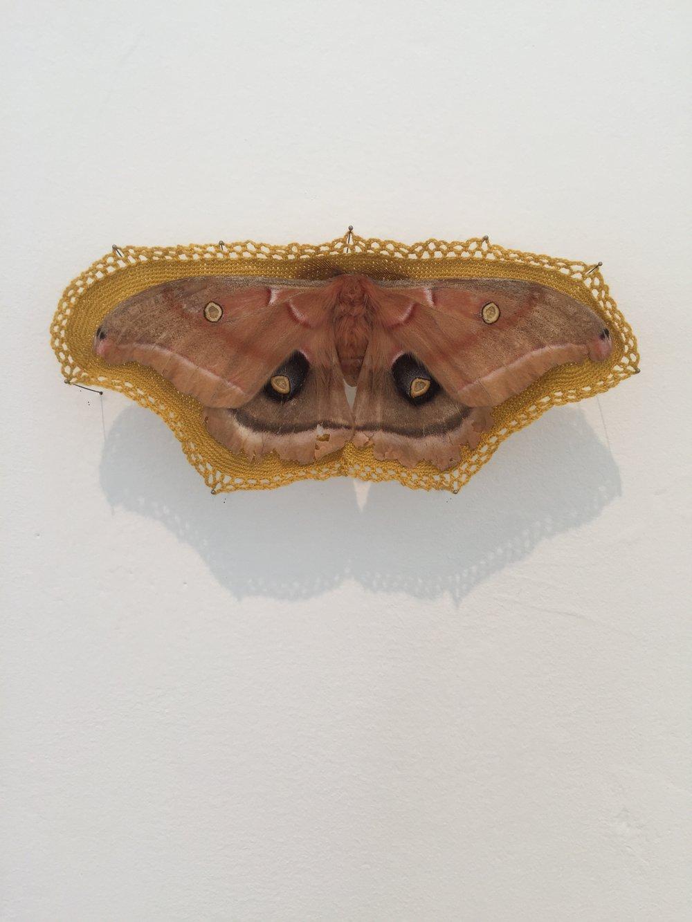 "Esther Traugot, ""Moth,"" 2018, found moth, dyed cotton thread, 2 x 5.25 x .5 inches"
