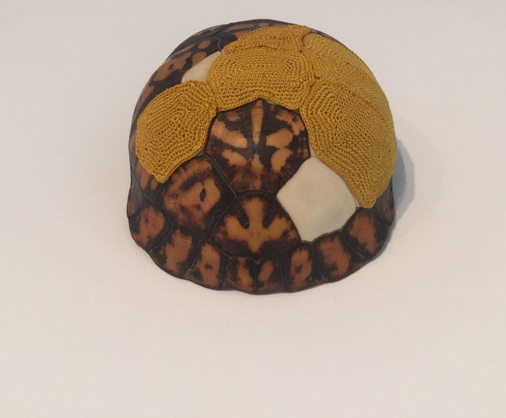 """Esther Traugot, """"Turtle Shell,"""" 2018, found turtle shell top, dyed cotton thread, 5 x 4 x 2.5 inches"""