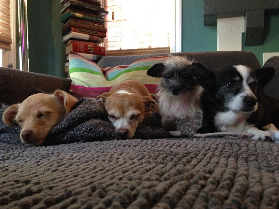 Lois's four rescue pups