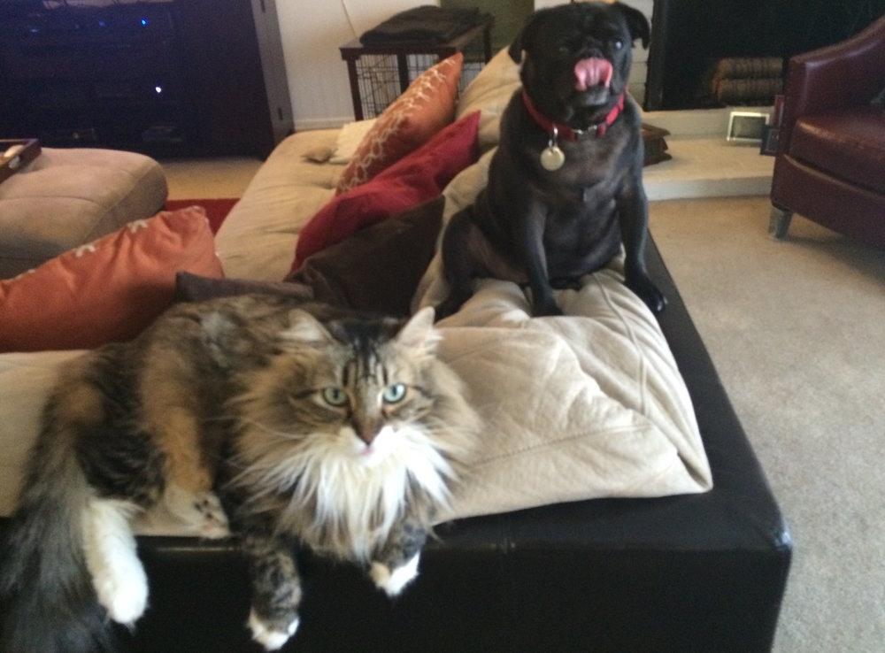 Lt. Boomer & Loki