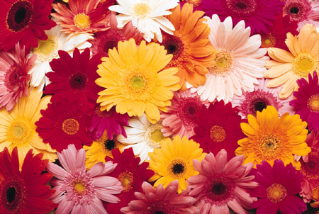 mixed flower colors.jpg