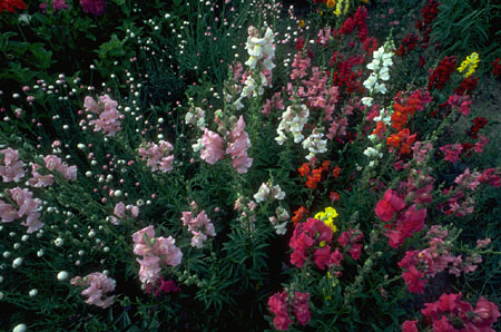 mixed flowers.jpg