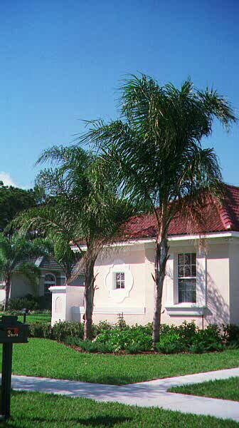 Queens Palms.jpg