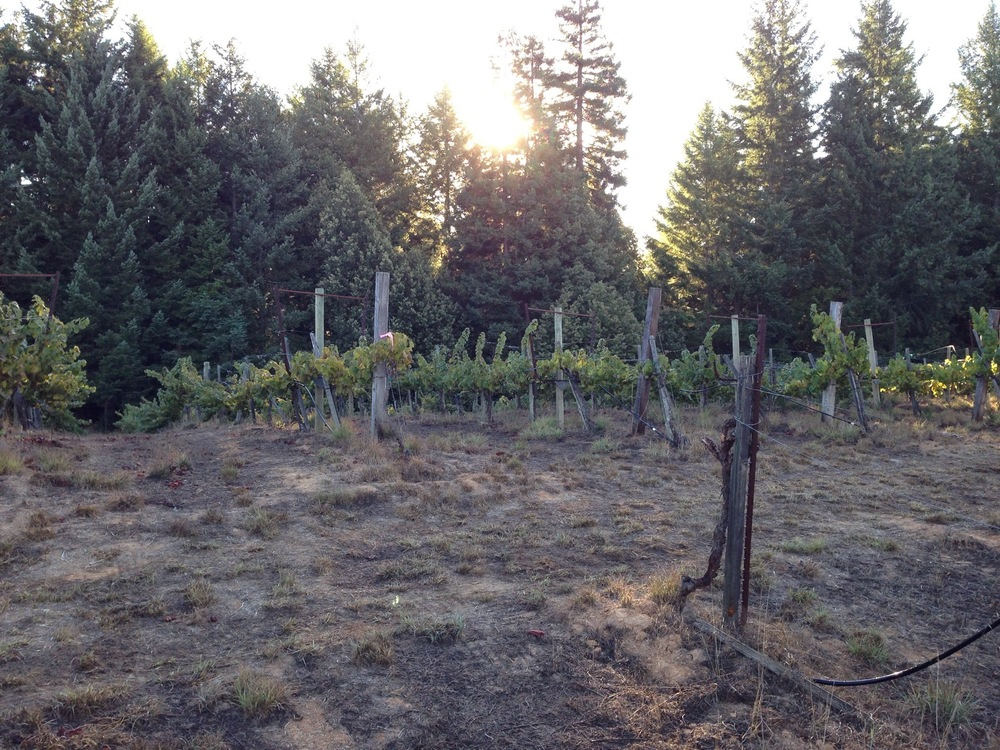 BLAKEMAN VINEYARD
