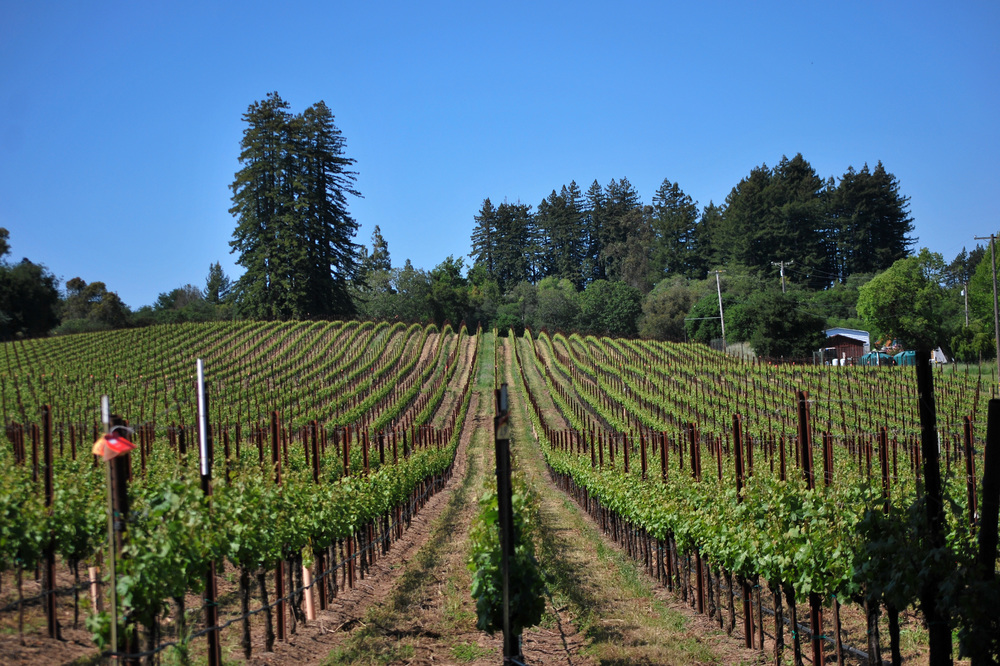 TINA MARIE VINEYARD