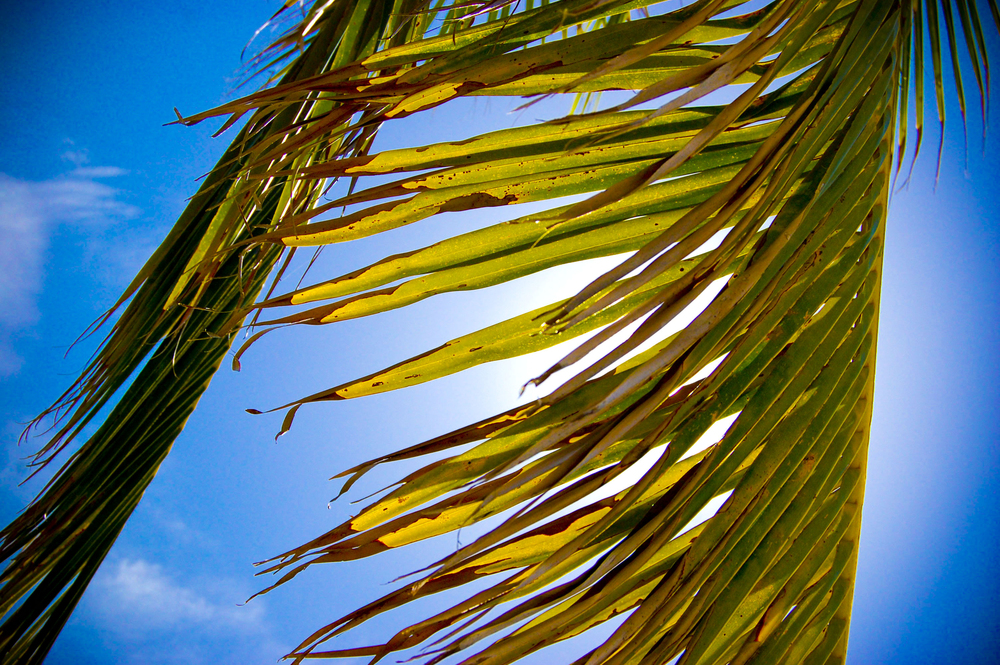 <style> .palm tree photography { display: none } </style>