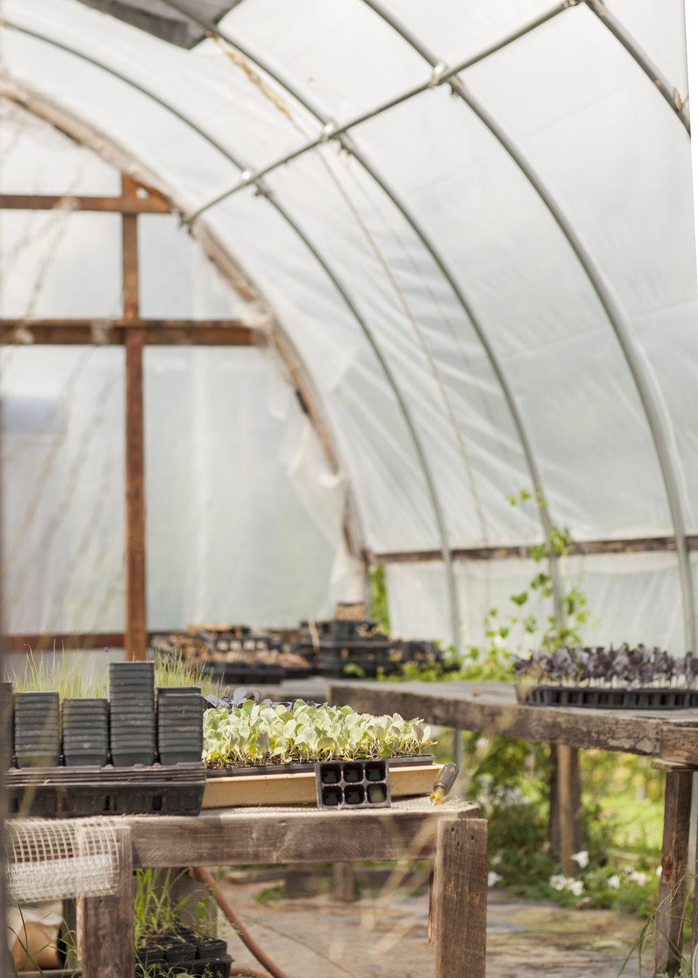 8 Greenhouse2.jpg