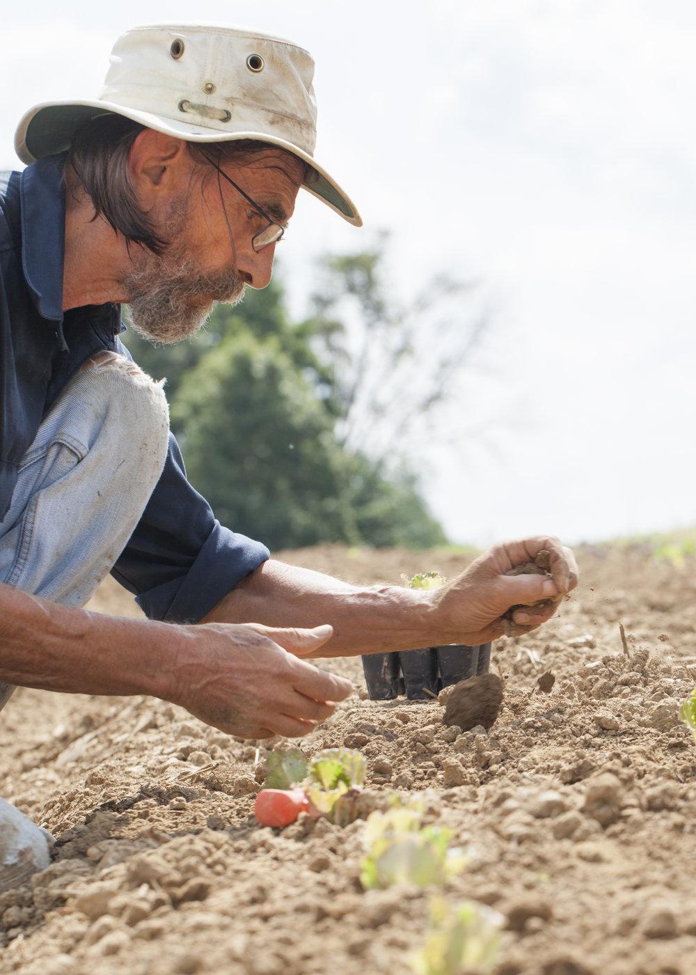 12 Farmer Planting.jpg