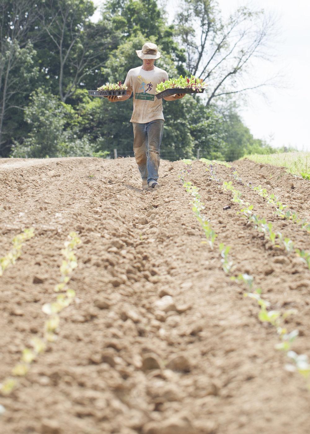 10 Farmer on Land.jpg