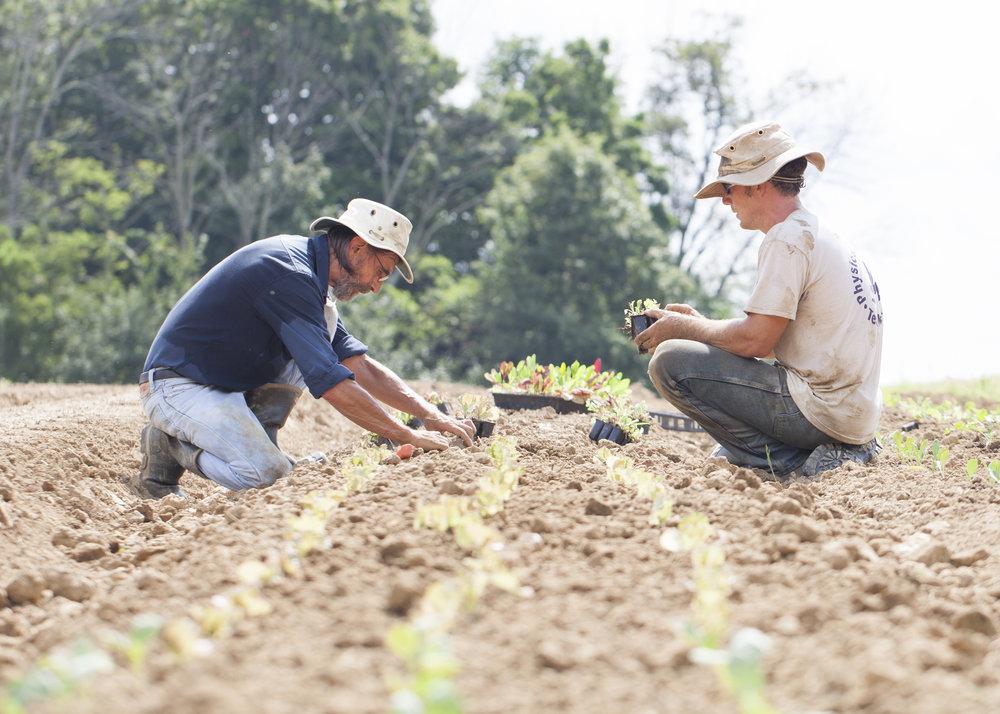 14 Farmers Planting.jpg