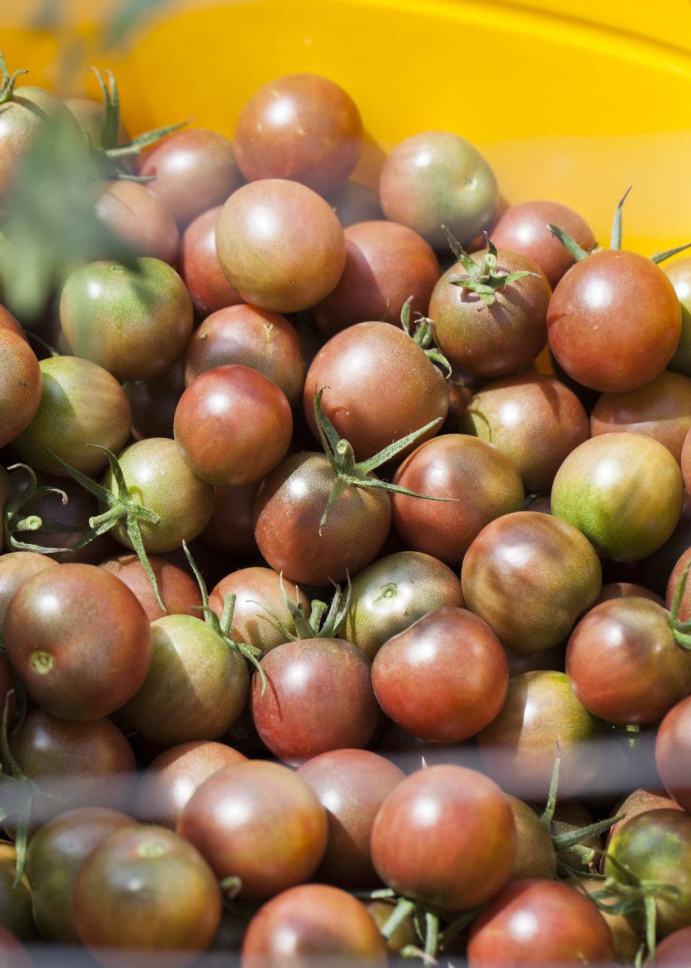 16 Cherry Tomatoes.jpg