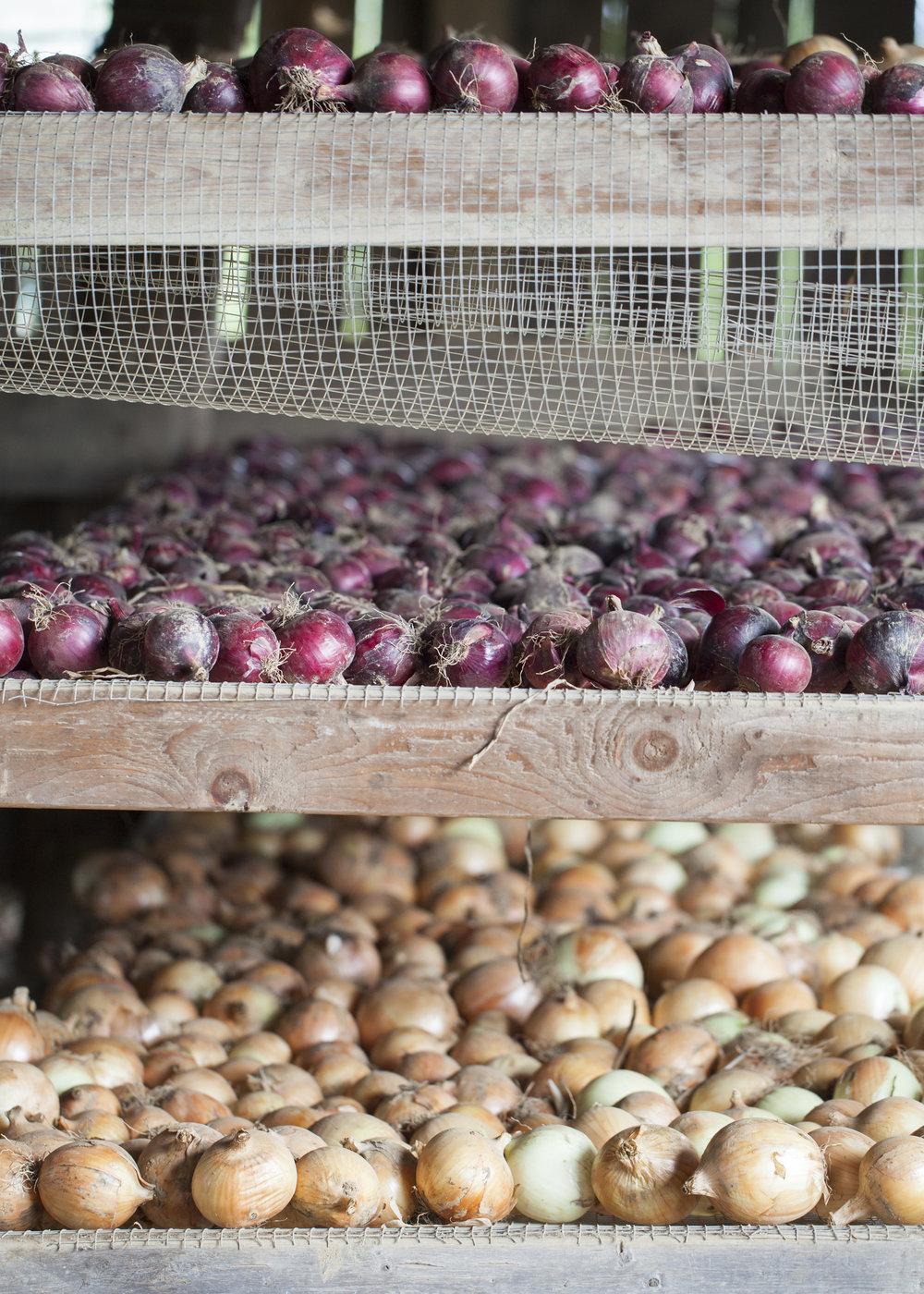 17 Onions Drying.jpg