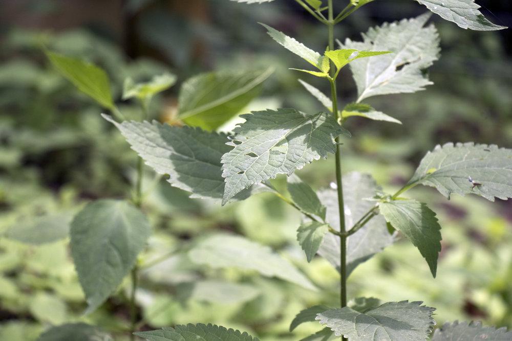 TrossetWildflowerSanctuary 4.jpg