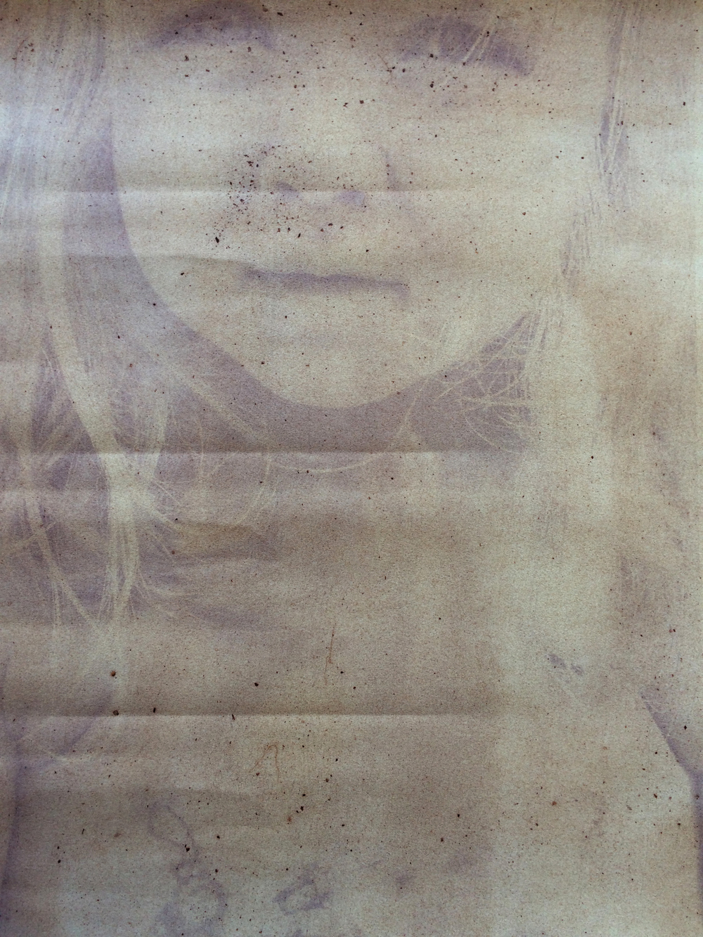 Eve, Mulberry emulsion anthotype, 2015