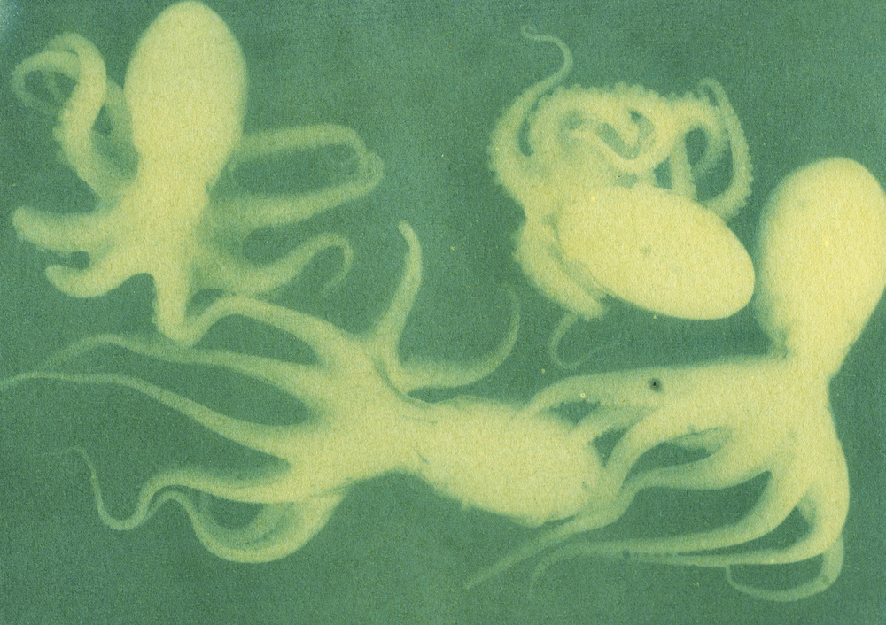 Octopus, Kale and grass emulsion anthotype, 2015