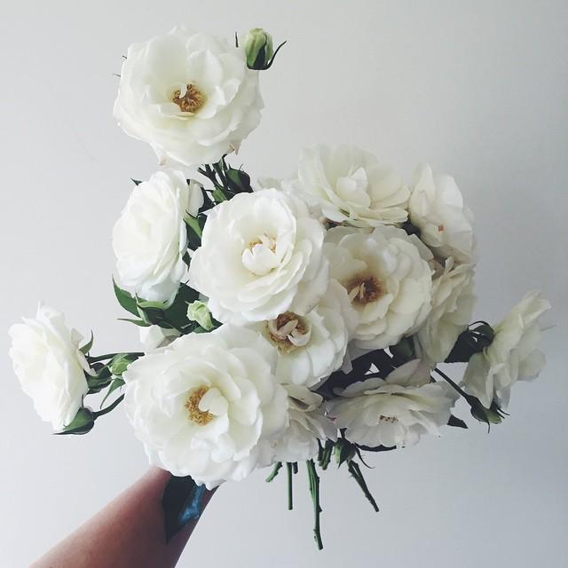 @ohfloraflowers 3.jpg