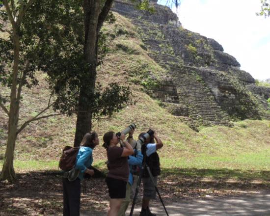 Pam Park – Birding at Tikal Maya site, Guatemala