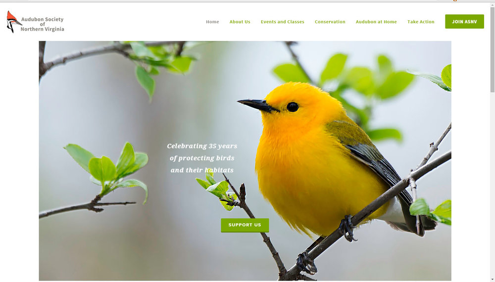 Prothonotary Warbler - Marilyn Gaizband