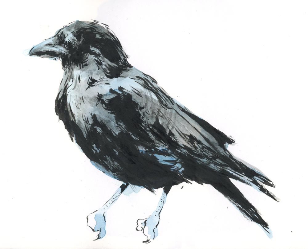 9-crow-1.jpg