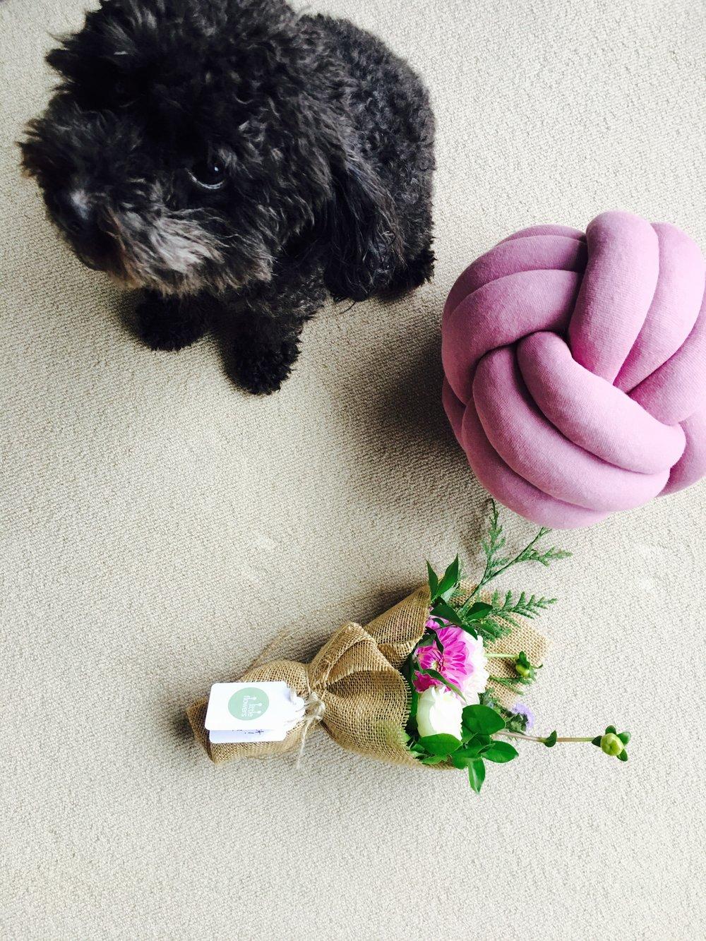 Black doggy, knot cushion & little posy