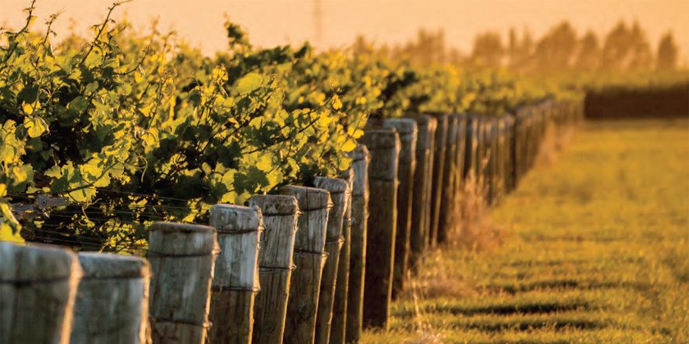 New-Zealand-Pinot-Noir.jpg