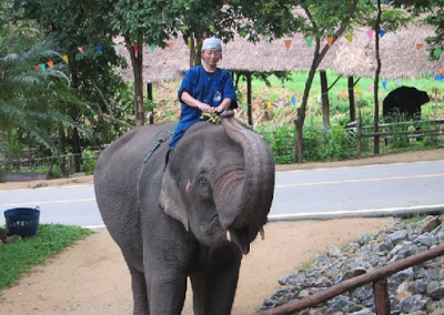 Japanese Mahout in Training
