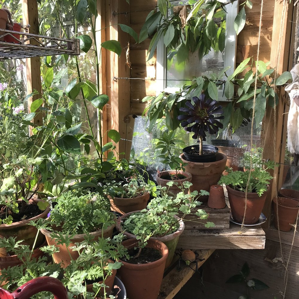 I have already take Gloria's advice and cleaned up the greenhouse and tidied my geraniums, I tend to loose interest over the winter months in my greenhouse but fingers crossed more of my plants will now survive !