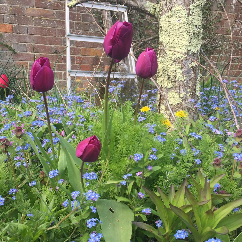 Don't forget to enjoy your beautiful Spring flowers - they will soon be gone for another year.