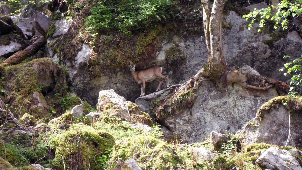 Go wildlife spotting at Aran Park just 20 minutes drive and 3km into Spain