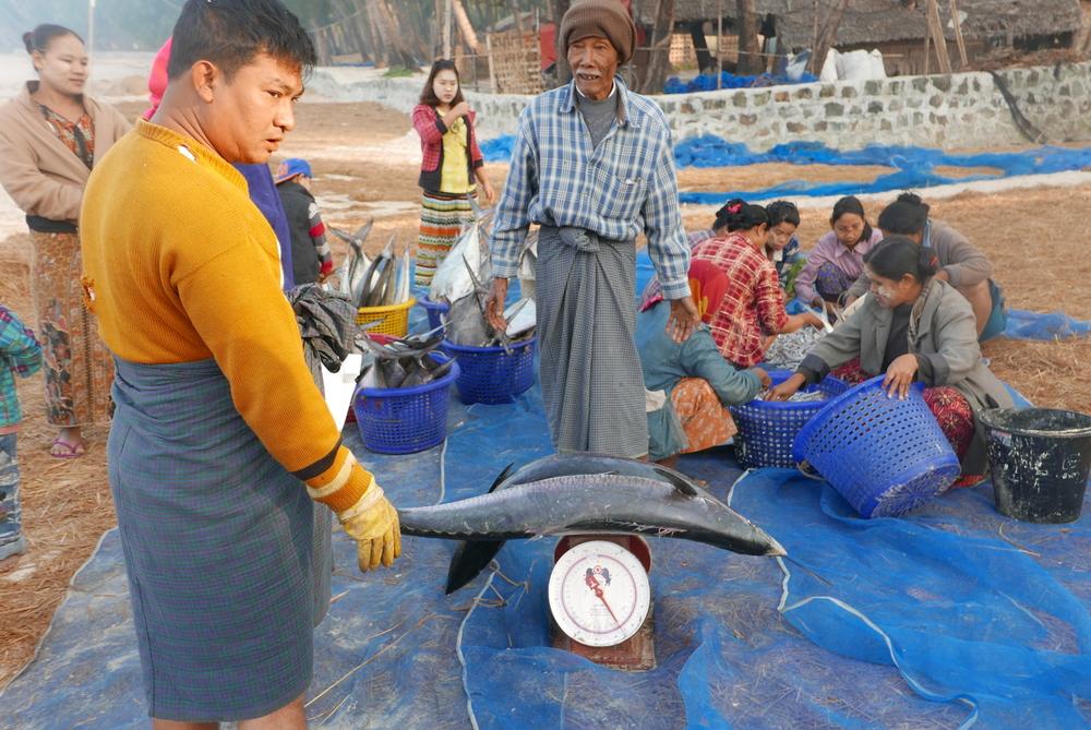 Myanmar 1463.jpg