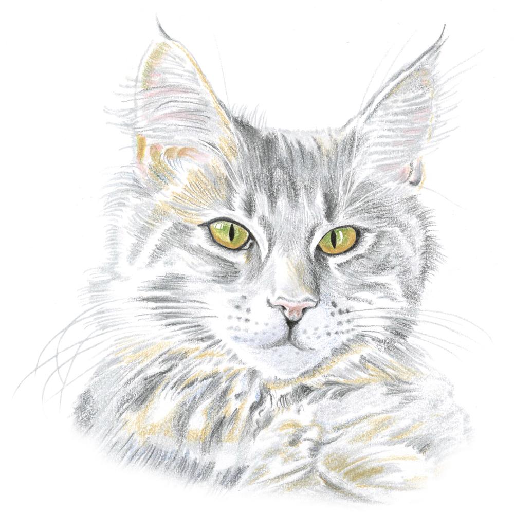 Katt 6.jpg