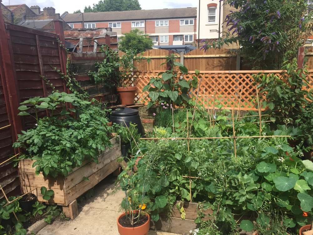 Our vegetable garden in July 2017 after building some recycled planters and beds.