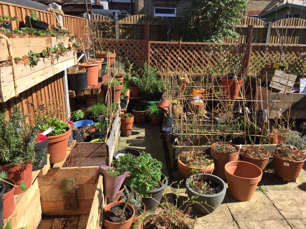 April 2018: The collection of fruit, veg and flowers is starting to build!