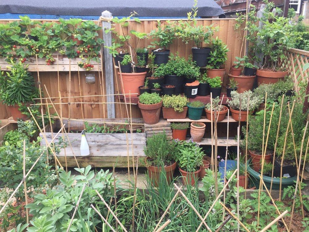 A corner of our urban garden.