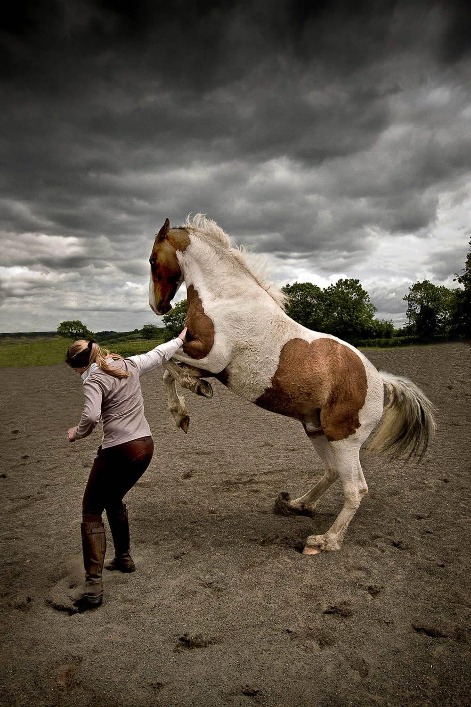horse-photographer-001-SS.jpg