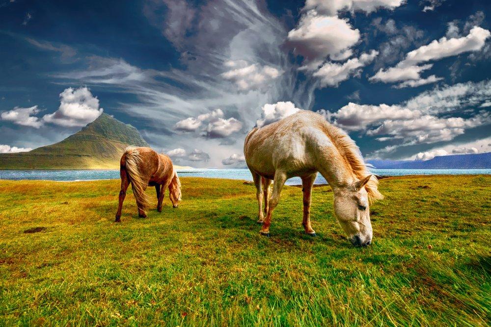 horses-2427513.jpg