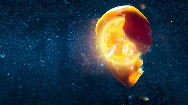 """Birth of a star""  #space #star #photography #Macro #cherrytomato #birth #aquarium"