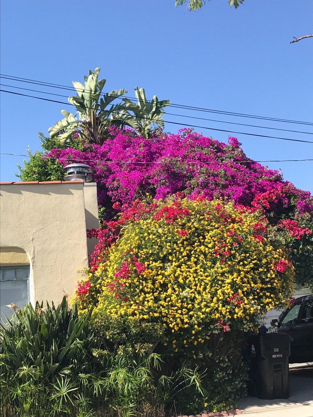Gay Bloom