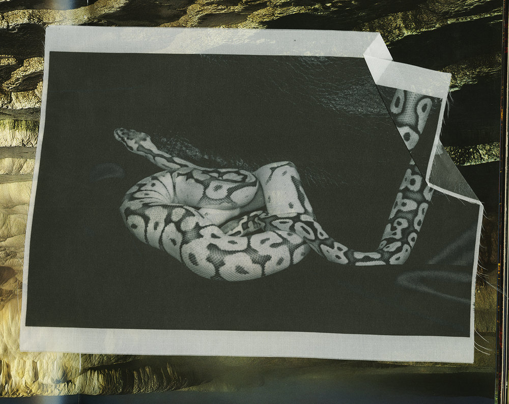 Snake on Silk.jpg