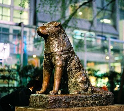 Hachiko's statue remains a symbol of this dog's extreme loyalty.