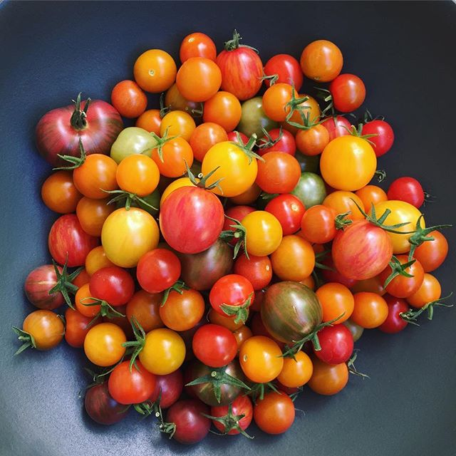 Be kind to your future self and make some damn sauce this weekend. #homegrown #tomatoseason #🍅 . . . . #foodandwine #bareaders #onmytable #wwllt #pbsfood #pursuepretty #buzzfeast #chefsroll #privatechef #thekitchn #kitchenlife #saveurmag #eatclean #foodwinewomen #farmersmarketinspo #vscofood #cheflife #goopmake #visitmarin #eatincolor #artofslowliving #mysummerkitchen #testkitchen #girlswithknives