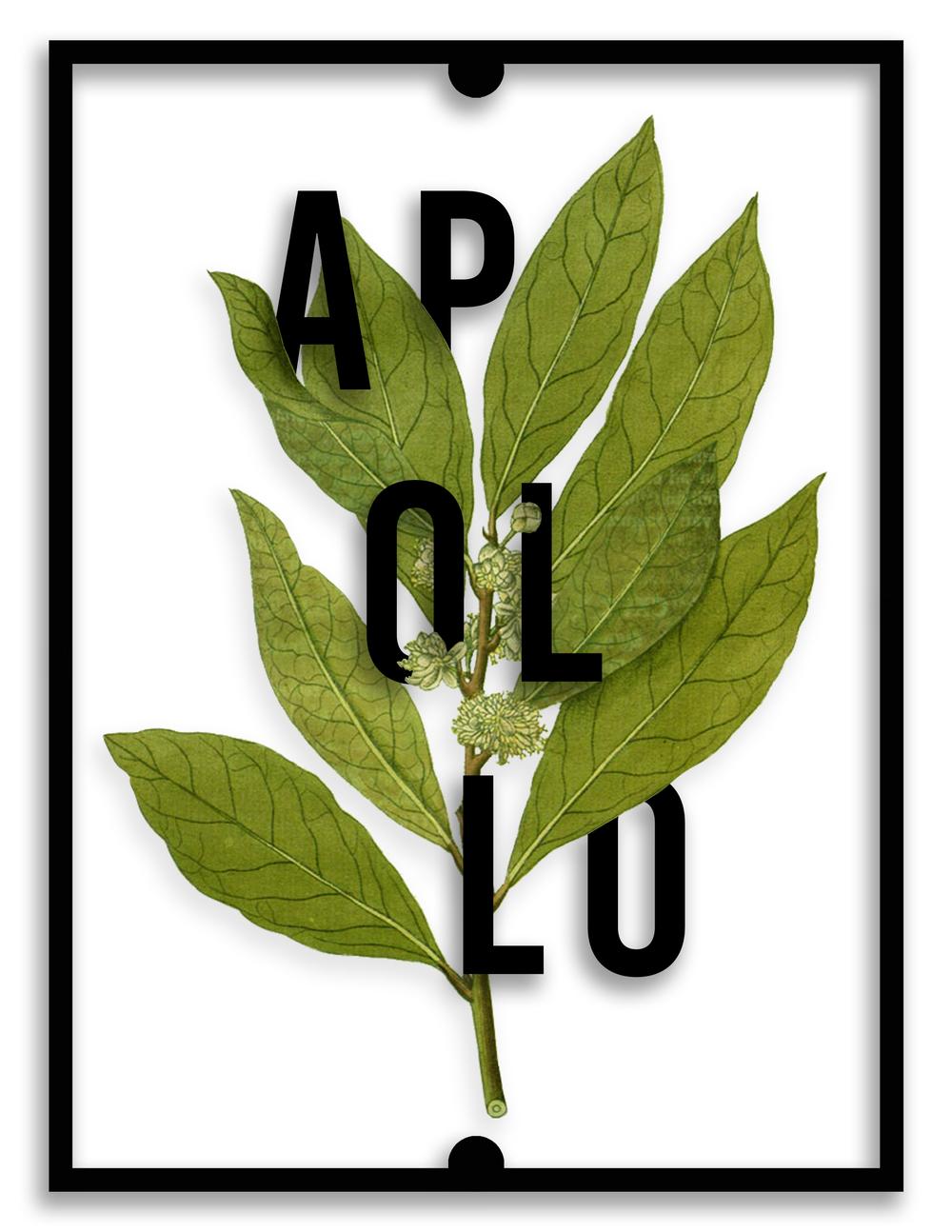 Sacred plants rachael anthoney apollog biocorpaavc Choice Image