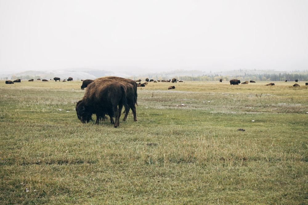 Wyoming -