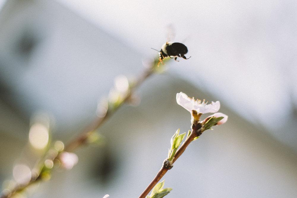 CherryBlossoms+Momo_05042018_015.jpg